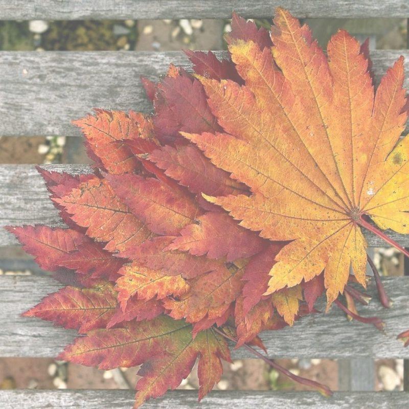 Herbst Look - Veganer Steppmantel
